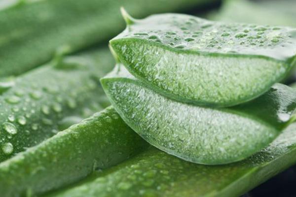 Summer skin care tips - Treat the burns with Aloe Vera gel