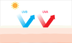 What_are_the_effects_of_UVA_and_UVB_rays_on_your_skin