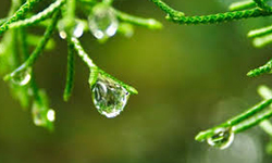 Monsoon_Ayurveda_For_Healthy_Skin1